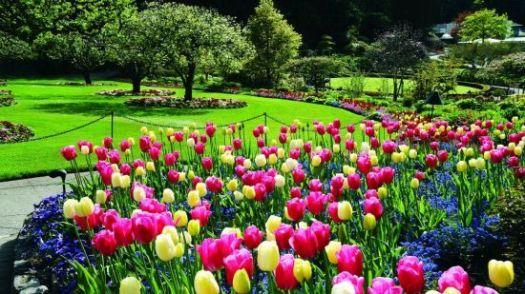 Beautiful Garden colorful