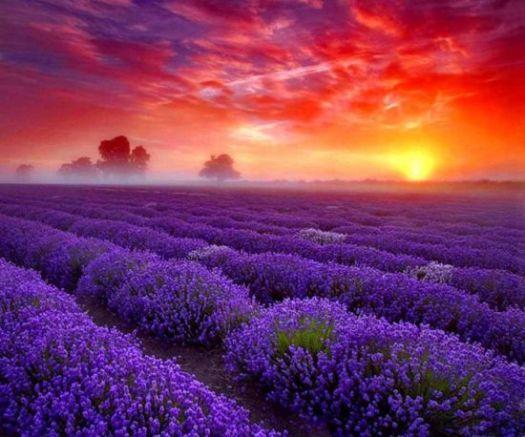 Beautiful Garden flower sunset