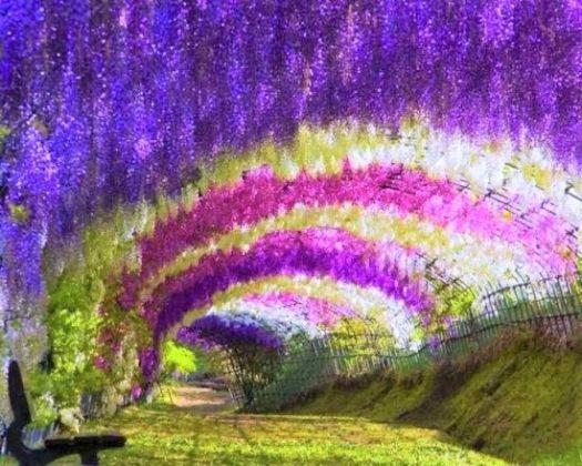Beautiful Garden japan kawai