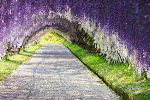 Beautiful Garden japan romantic
