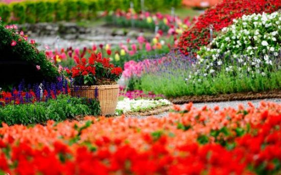 Beautiful Garden mesmerising