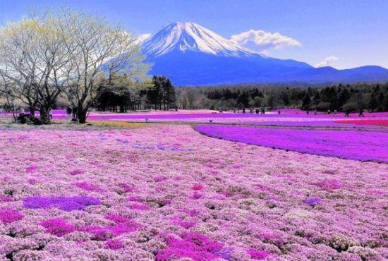 Beautiful Garden mountain