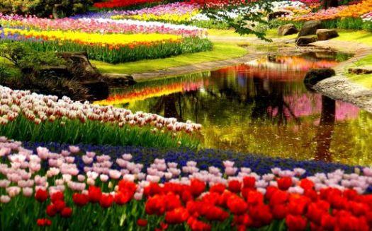 Beautiful Garden Relaxing