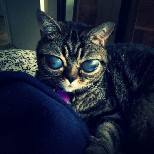 cute cat kucing lucu imut