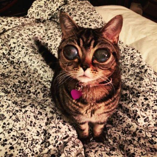 cute cat kucing lucu